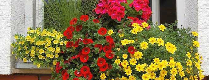 Цветя за терасата